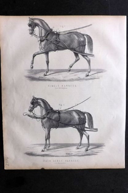 Miles C1875 Antique Print. Single Harness & Pair Horse Harness